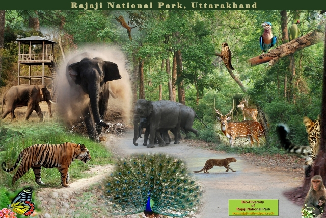 Bio-diversity of Rajaji National Park